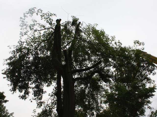 Baumschäden werden behoben
