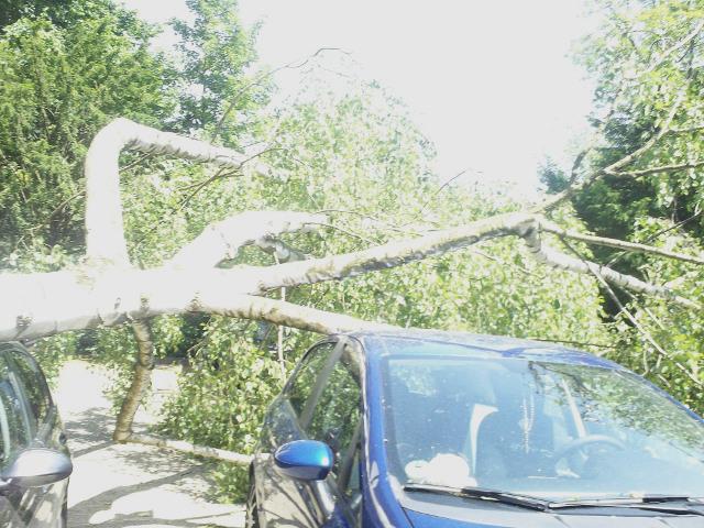 Bäume stürzten auf Autos